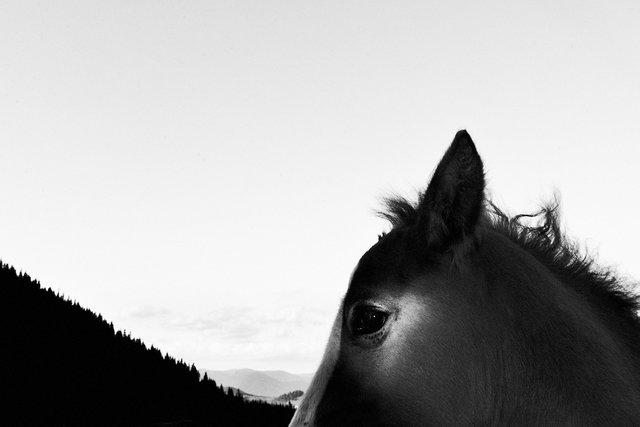 Horses_098.jpg