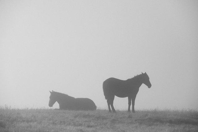 Horses_125.jpg