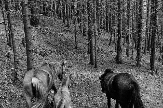 Horses_093.jpg