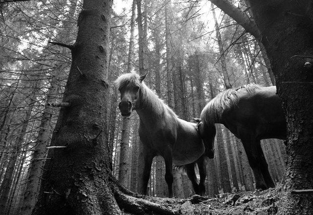 Horses_108.jpg