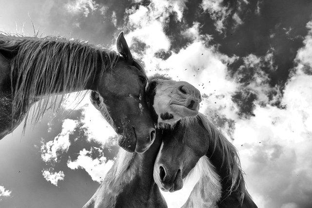Horses_048.jpg