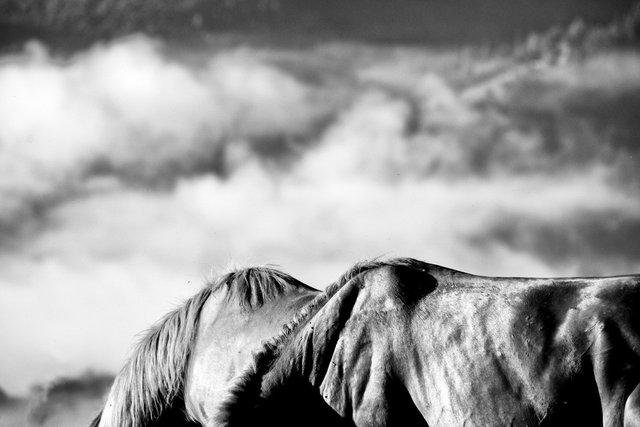Horses_035.jpg