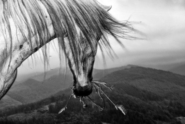 Horses_028.jpg