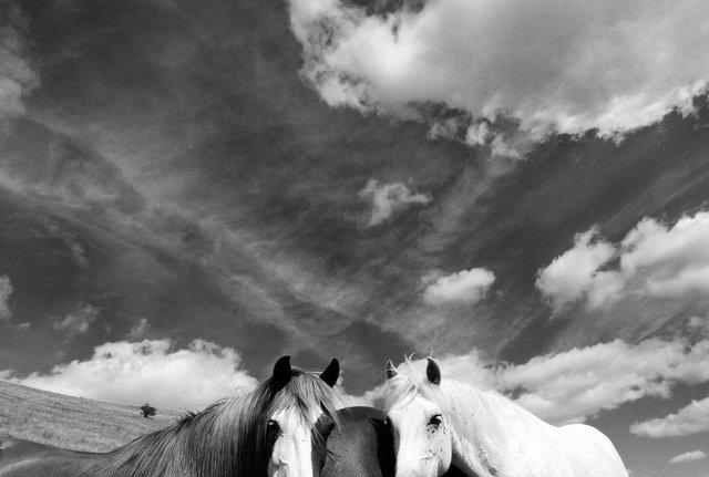 Horses_009.jpg