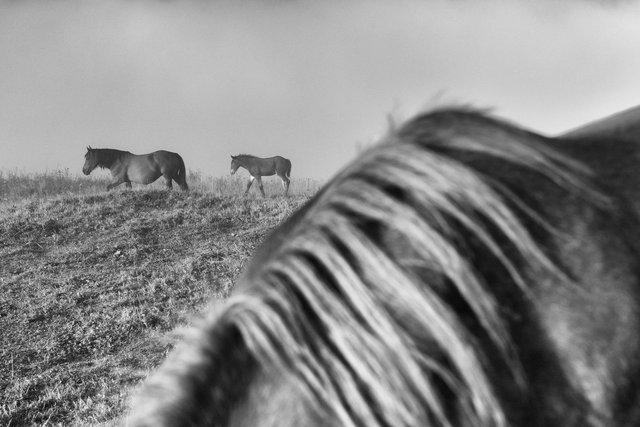 Horses_119.jpg