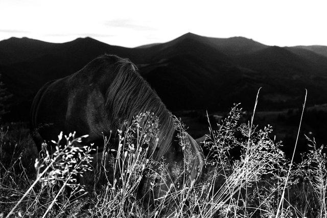 Horses_069.jpg