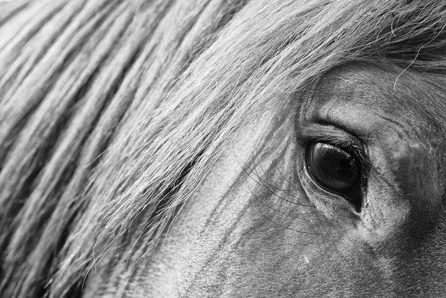 Horses_056.jpg