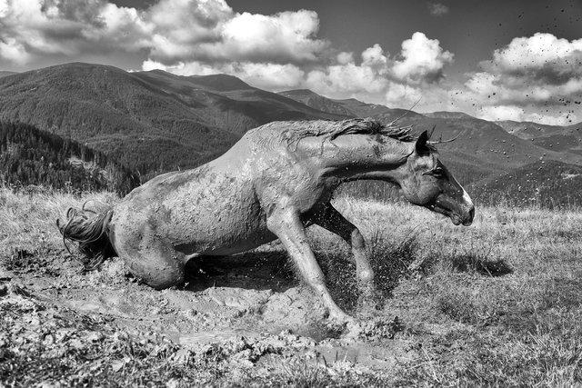 Horses_038.jpg