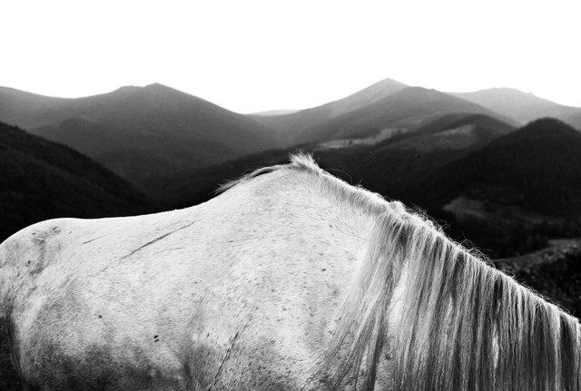Horses_033.jpg