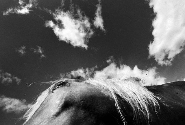Horses_019.jpg