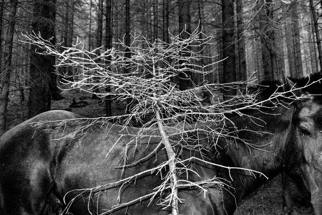 Horses_050.jpg