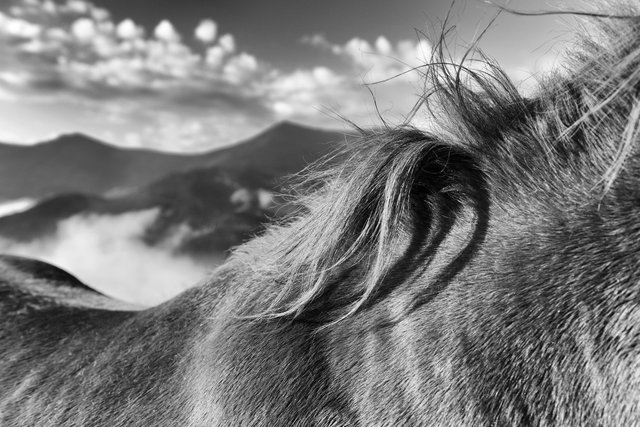 Horses_066.jpg