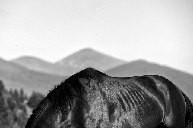Horses_034.jpg