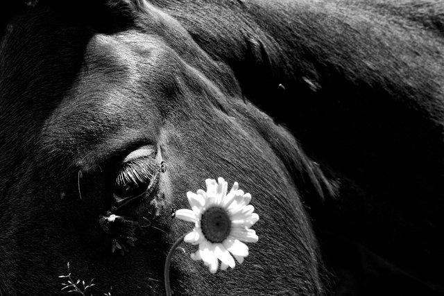 Horses_012.jpg