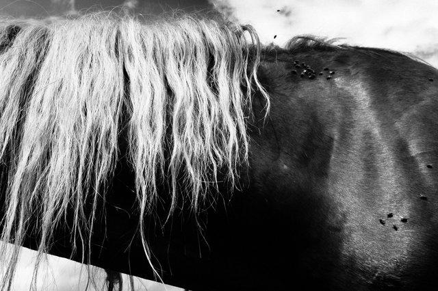 Horses_116.jpg