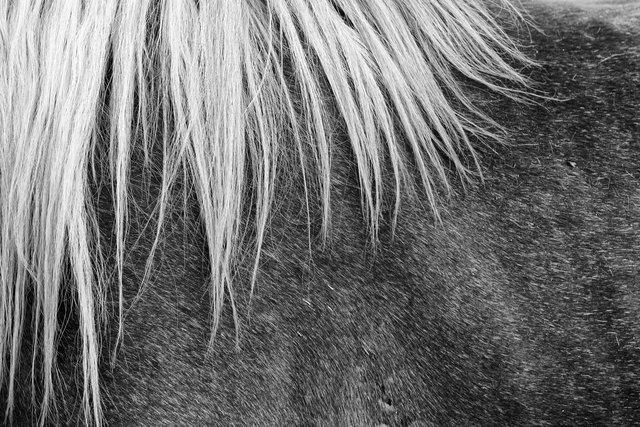 Horses_057.jpg