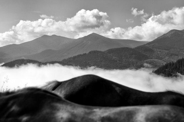Horses_006.jpg