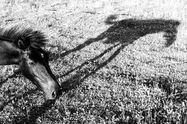 Horses_077.jpg