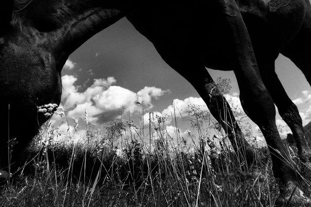 Horses_095.jpg