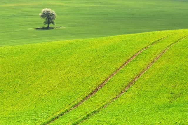 Terra Galicia_(Yurko Dyachyshyn)_10.jpg