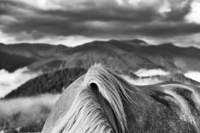 Horses_053.jpg