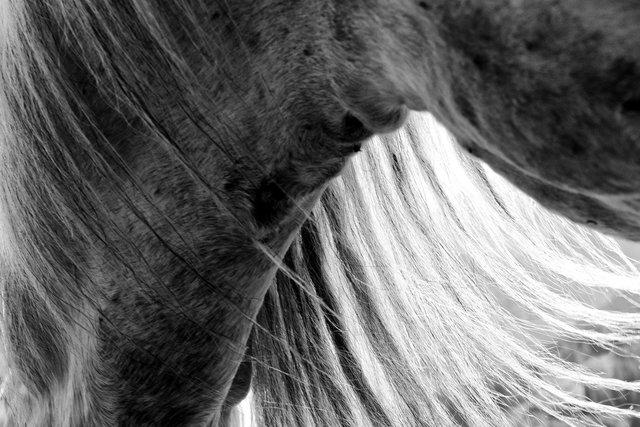 Horses_084.jpg