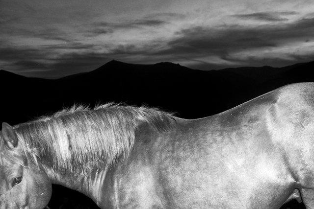 Horses_032.jpg