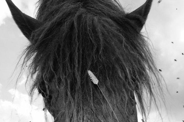 Horses_059.jpg