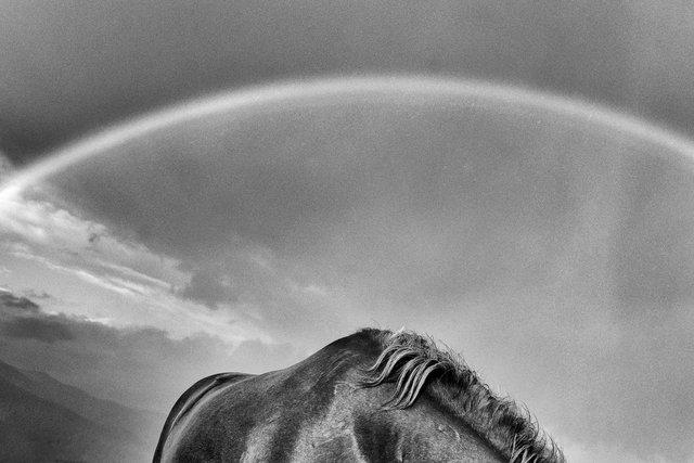 Horses_049.jpg
