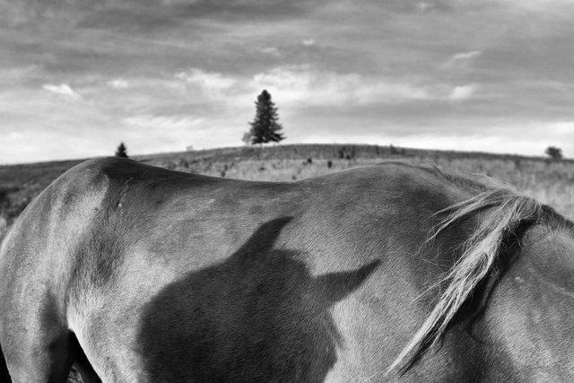 Horses_046.jpg