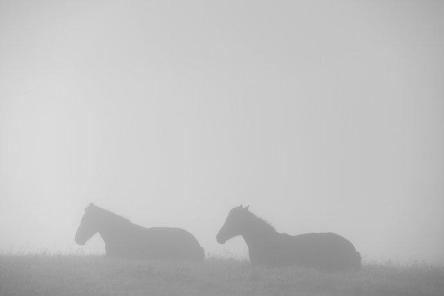 Horses_051.jpg