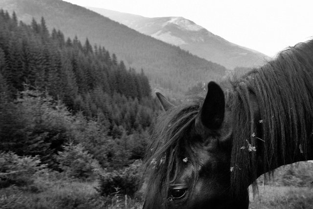 Horses_094.jpg