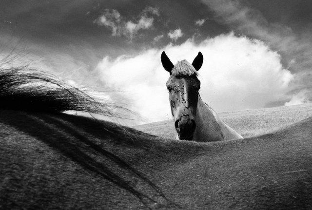 Horses_017.jpg