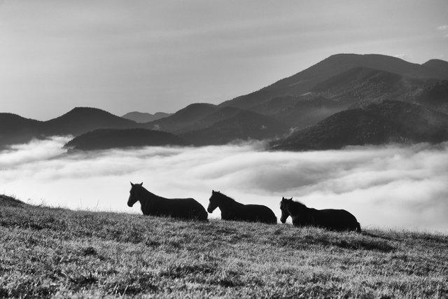 Horses_003.jpg