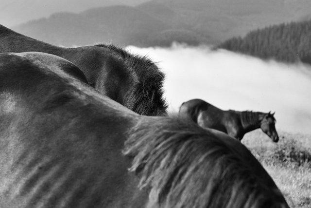 Horses_044.jpg