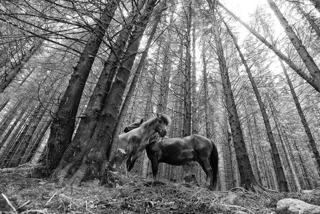 Horses_092.jpg
