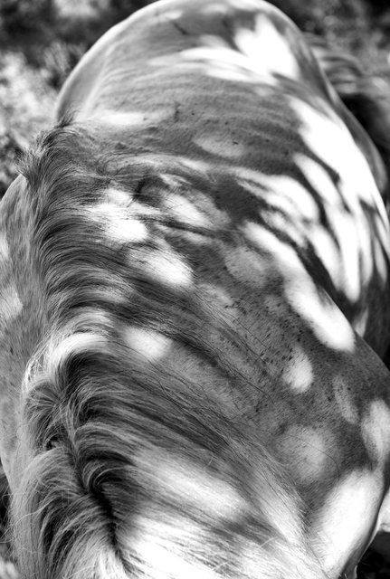 Horses_041.jpg