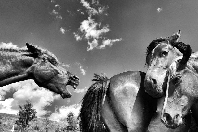 Horses_104.jpg