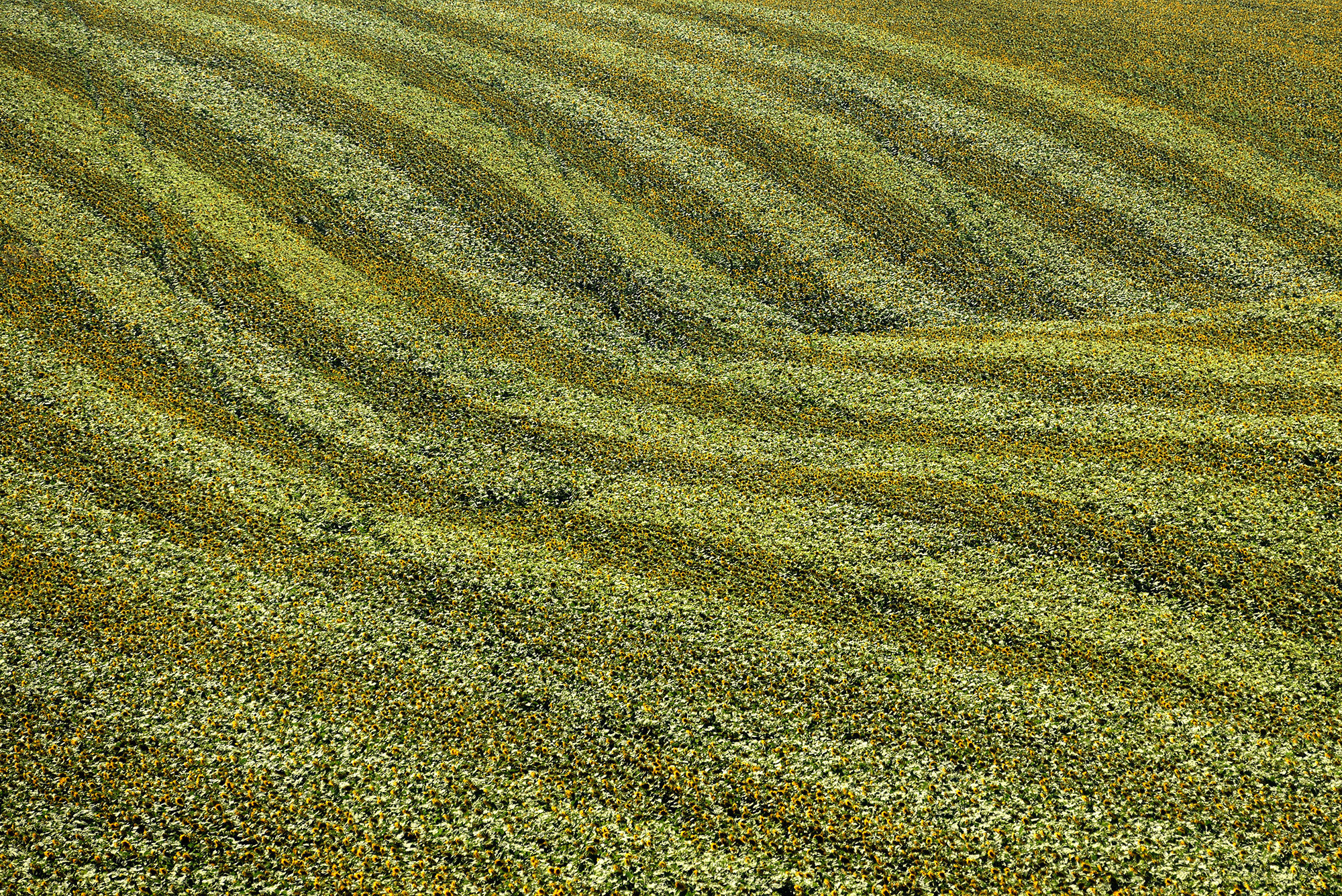 Terra Galicia_(Yurko Dyachyshyn)_31.jpg