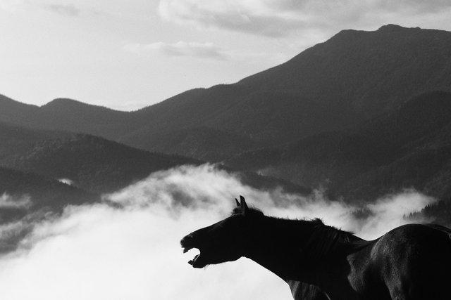 Horses_121.jpg