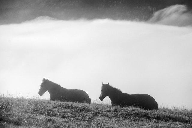 Horses_128.JPG