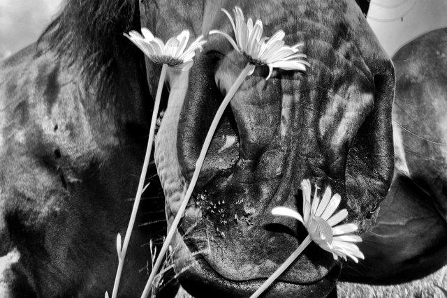 Horses_080.jpg