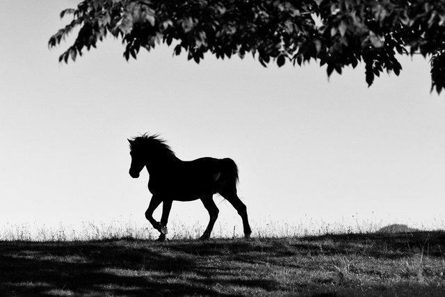 Horses_023.jpg