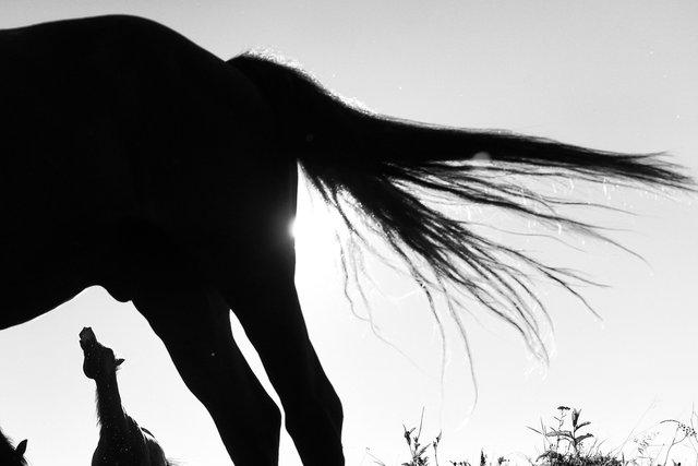 Horses_102.jpg
