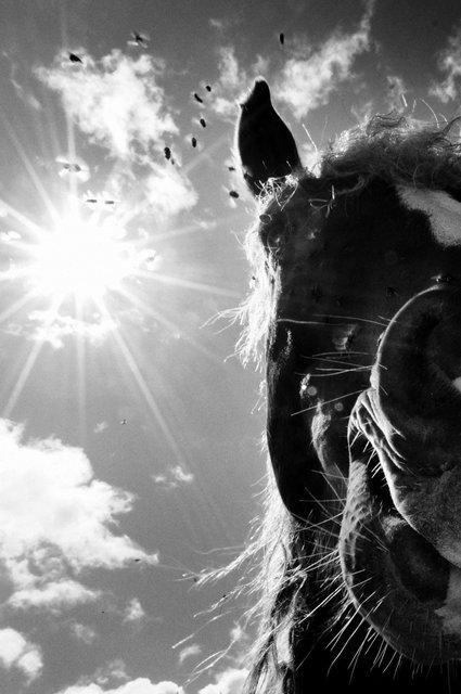 Horses_091.jpg
