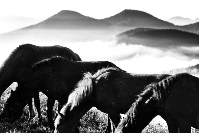 Horses_029.jpg