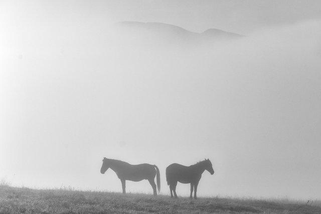 Horses_024.jpg