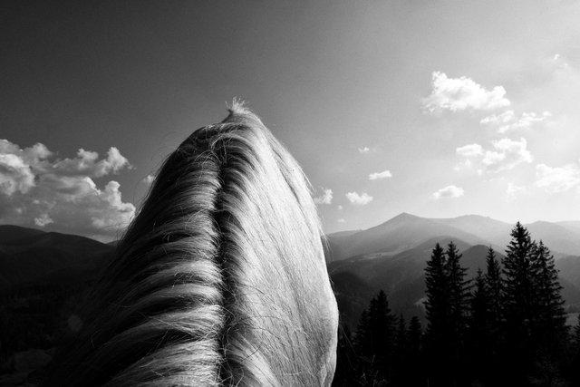 Horses_002.jpg