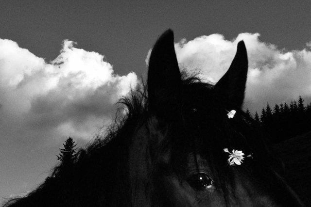Horses_100.jpg