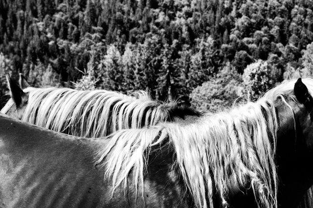 Horses_015.jpg